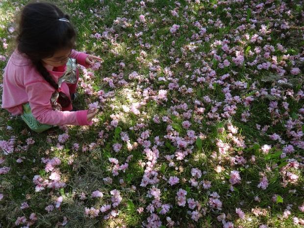 Pink Flower Petals