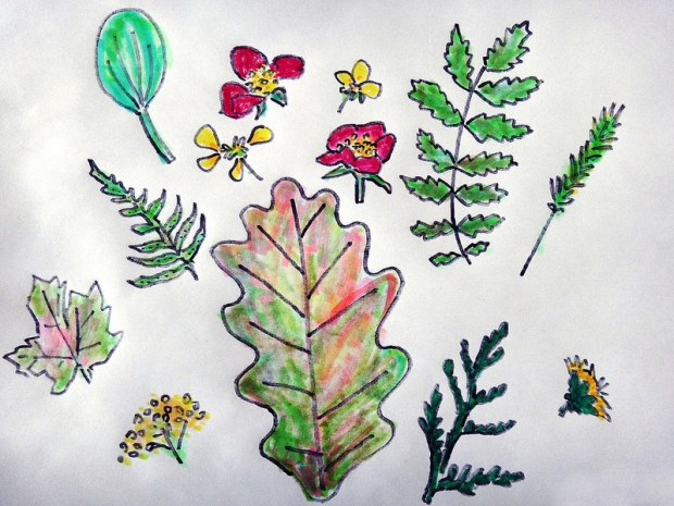 Pressed Plants / Drawing