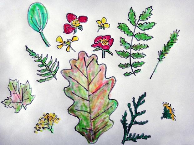 Pressed Plants / Drawing