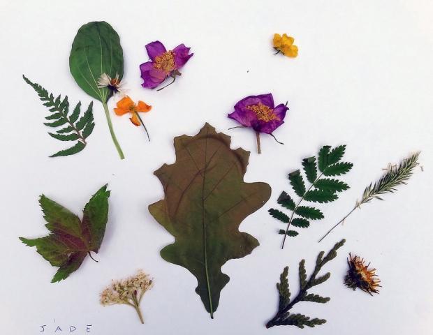 Pressed Plants / 2