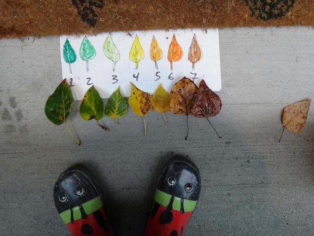 6 Nature